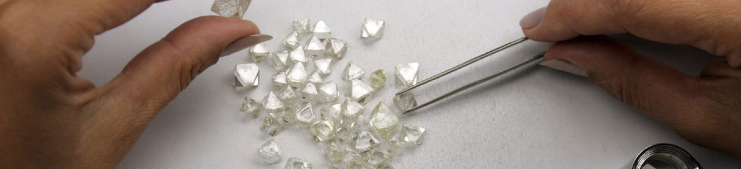 Rough diamonds being inspected.